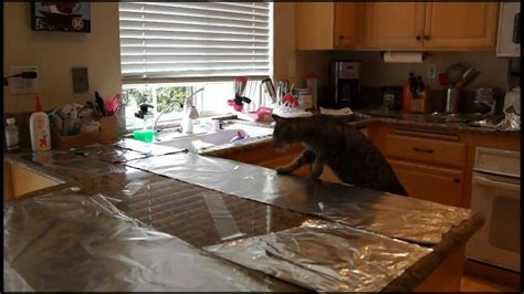 how to stop cats jumping on kitchen bench cat countertop surfing prevention aluminum foil and
