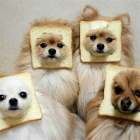 is bread for dogs 13 gifs of dogs wishing you a happy hump day barkpost