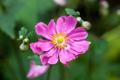 fiori primaverili da giardino fiori primaverili pollicegreen