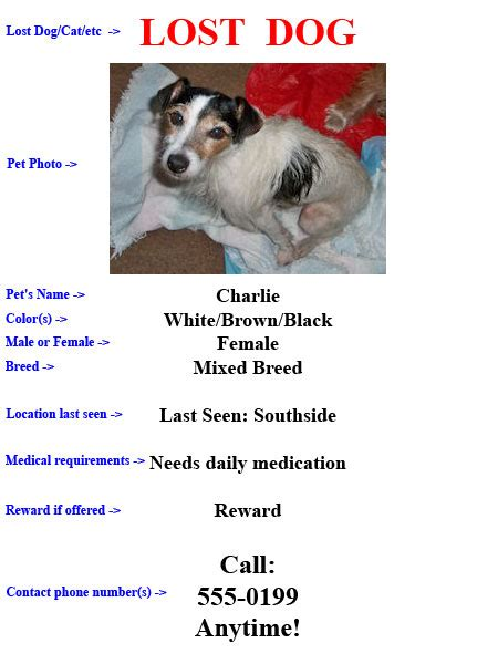 lost flyer lost and missing pet jacksonville and florida