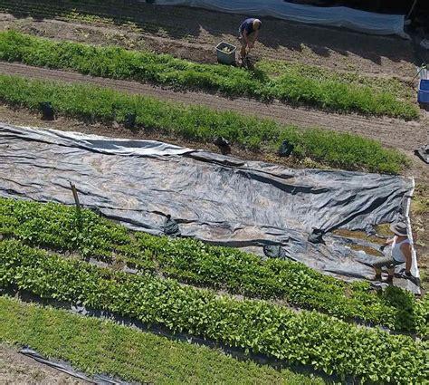 marburger esszimmer yelp landscape tarp 100 images premium 3 ft x 300 ft