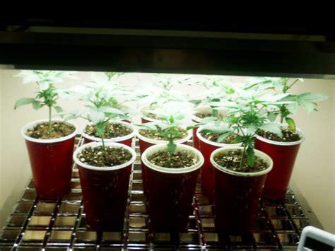 artificial plant lights   growing  plants
