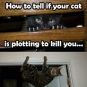 how to tell if your cat is plotting to kill you the oatmeal how to tell if your cat is plotting to kill you by