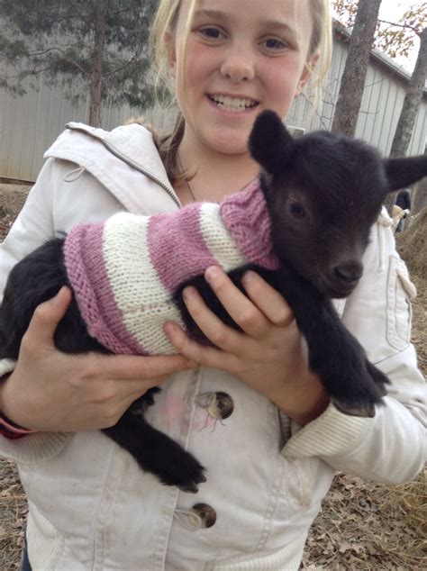 pattern for knitted goat sweater knitted baby goat sweater for nigerian dwarf goat