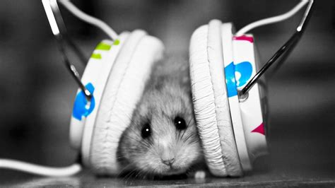 with headphones mouse with headphones hd wallpaper 187 fullhdwpp hd wallpapers 1920x1080