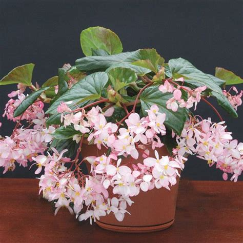 fragrant indoor plants top fragrant houseplants fragrance green leaves and plants