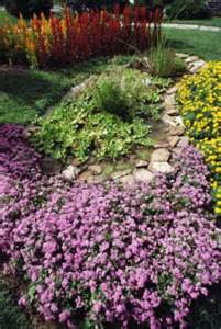 types of low lying perennials for ground cover home