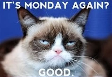 Grumpy Cat Monday Meme - grumpy cat monday pictures photos and images for