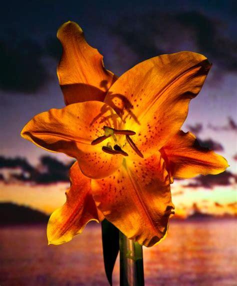 poesia i fiori tra fotografia e poesia barbieri racconta i fiori della