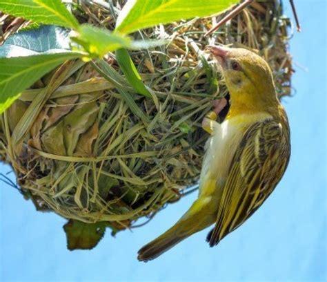 arunachala birds different types of birds nests part 1