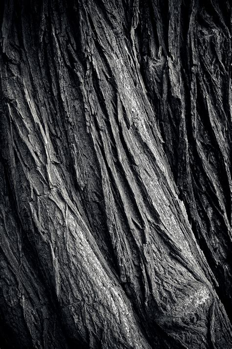 Black And White Soil Pattern free images nature forest rock black and white grain