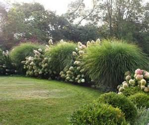 large maiden grass w hydrangea landscape pinterest
