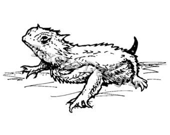 coloring page horned lizard horned frog coloring pages google search riff ram