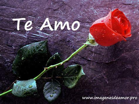 imagenes te amo flor 14 imagenes de hermosas rosas con frase te amo