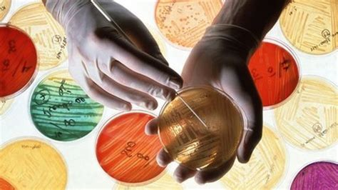 Antibiotics Also Search For Antibiotic Resistance Now Global Threat Who Warns News
