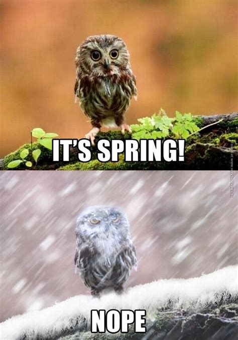 First Day Of Spring Meme - best ideas about spring nope it s spring and first day of