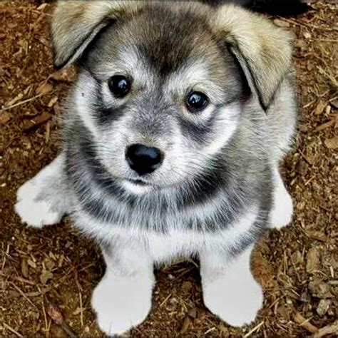puppy mixes puppy mixes puppies puppy