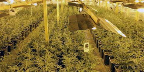 Grow Room by How To Build An Indoor Marijuana Grow Room