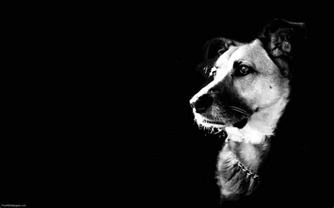 dog wallpapers wallpaper cave cool dog backgrounds wallpaper cave
