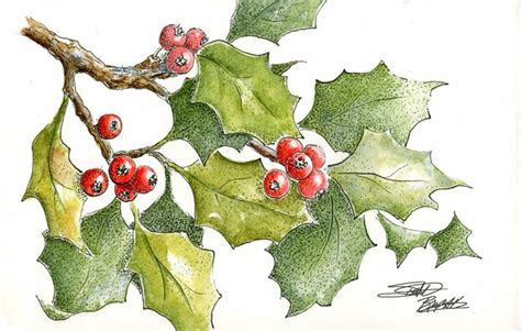watercolor holly tutorial sbwatercolors and sketching holly leaves pen and ink plus