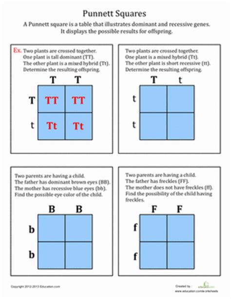 Punnett Squares Worksheet by Punnett Squares Worksheet Education