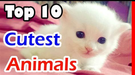 cutest in the world 2017 10 animals top 10 cutest animals in the world 2017 top