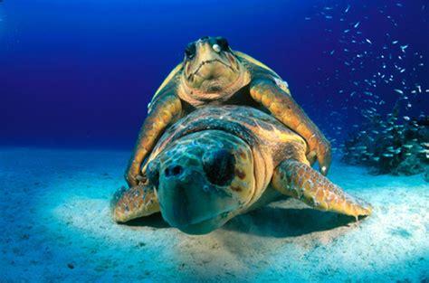 imagenes de libres y tortugas foto del d 237 a tortugas marinas aqua
