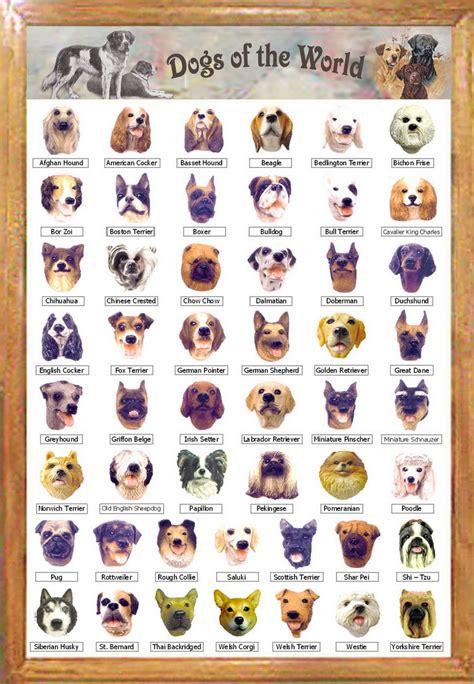 breeds  dogs     world dog breeds
