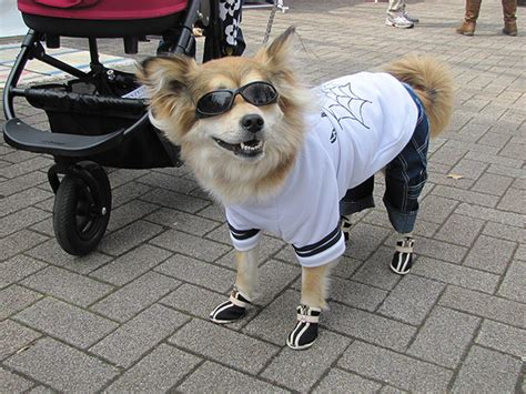 shoes with dogs on them 17 dogs wearing pumped up kicks barkpost