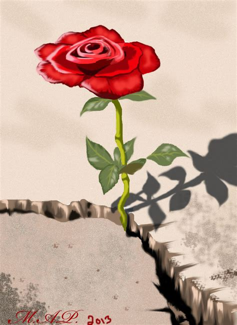 rose growing from concrete tattoo the that grew from concrete paint drawings
