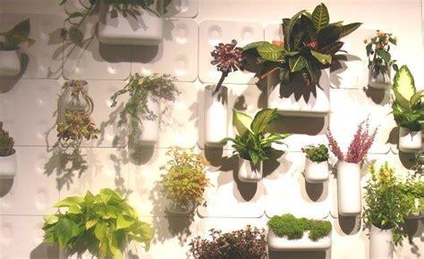 indoor garden shark tank 1000 images about succulents indoor gardening on