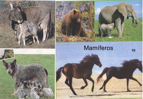 fotos animales mamiferos med 114 reino animal vertebrados mamiferos