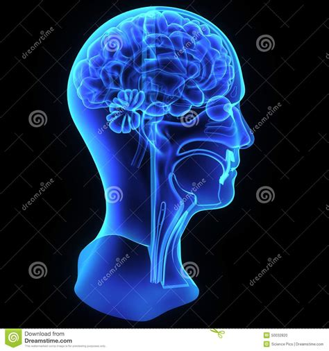 rhoton s atlas of neck and brain 2d and 3d images books and neck anatomy stock illustration image 50032820