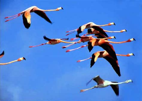 can flamingos fly buffettnews com