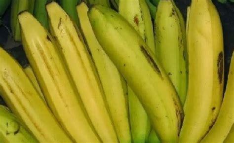 Bibit Pisang Ambon Dengan Rasa Yang Sangat Manis manfaat buah pisang ambon untuk kesehatan adasehat net