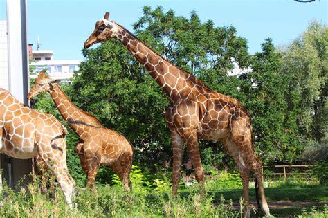 Zoologischer Garten Primark by Enjoy Your