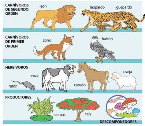 cadenas troficas componedores leones cazando zorros cazando vacas comiendo thinglink