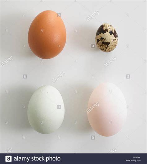 chicken egg size stock  chicken egg size stock