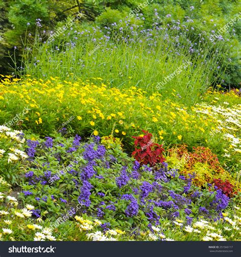 Bright Garden Flowers Beautiful Background Bright Garden Flowers Stock Photo 251566117