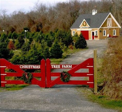 barns christmas trees red and farms