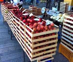 banco alimentare imola newsletter agronotizie