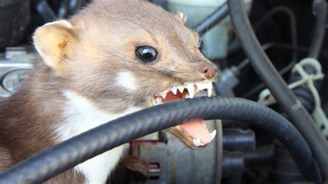 Marder Auto Versicherung by Marderbiss Kfz Versicherung Checken Computer Bild