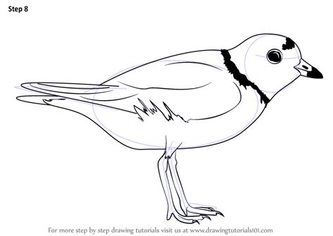 learn how to draw a piping plover shorebirds step by