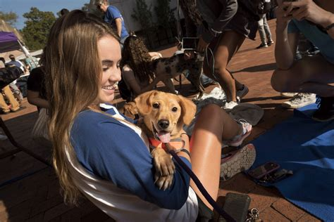rent a puppy chi omega exceeds goal with rent a puppy event news