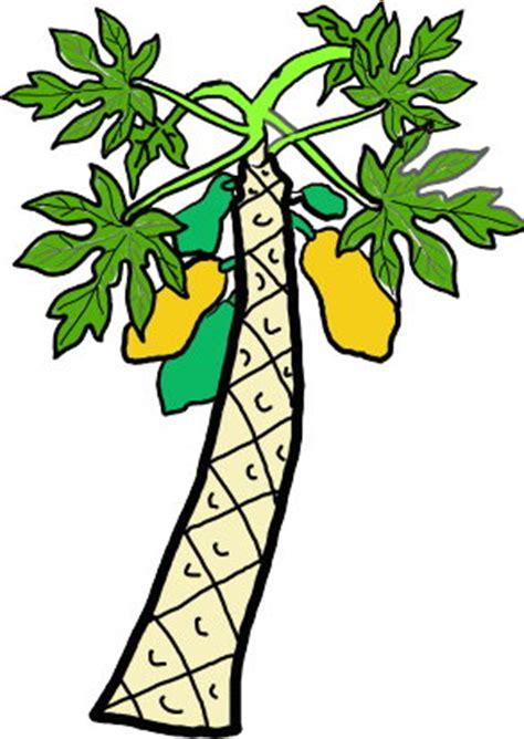 Papaya Tree Clipart image papaya tree clipart best