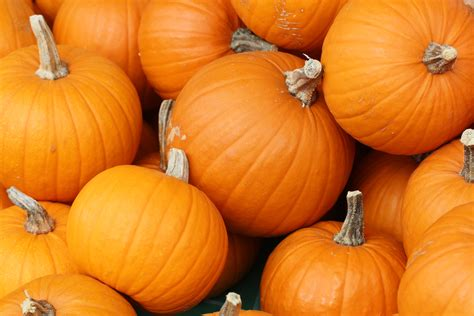 image of pumpkin file bake these pumpkins in toronto jpg wikimedia commons