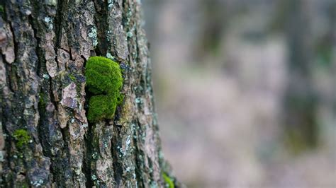 wallpaper tree trunk moss  uhd  picture image