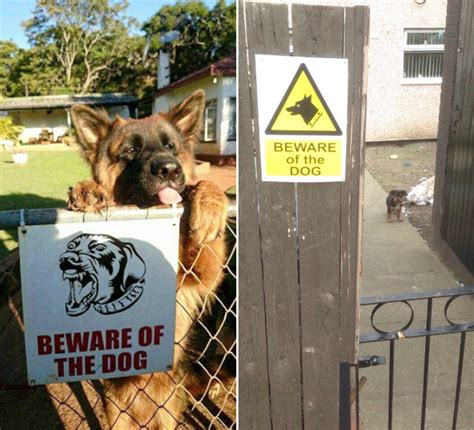 beware the dog house dangerous dogs behind beware of the dog signs