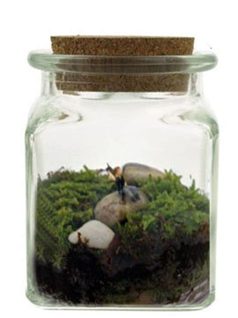 terrarium le the geeky gift guide ecospheres the easiest aquarium
