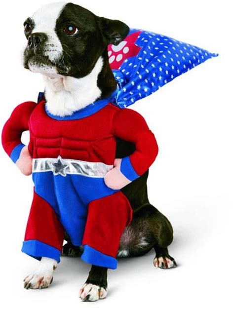 new year costumes for dogs best 25 costumes ideas on